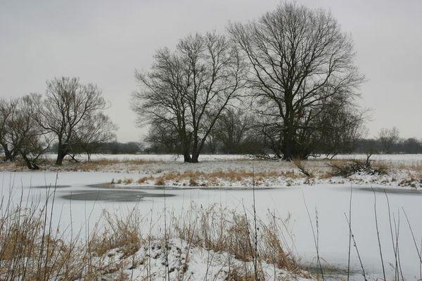 Oderlandschaft im Winter