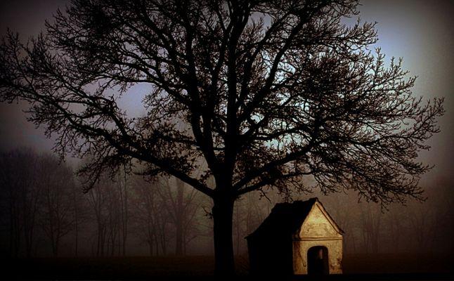 Odins Baum