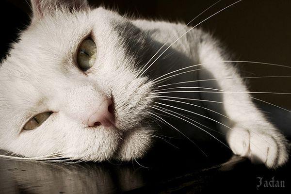 öhm.... weiße Katze auf schwarzem Grund :o)