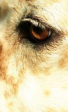 Oeil angélique