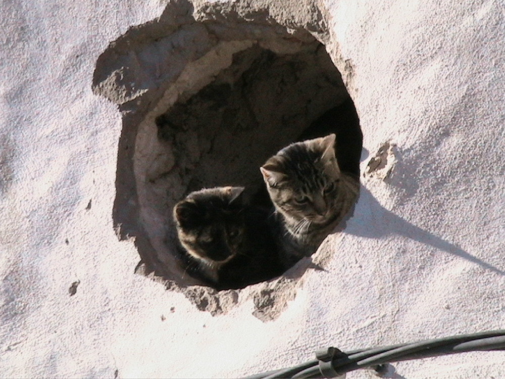 oeil de beuf a deux chats