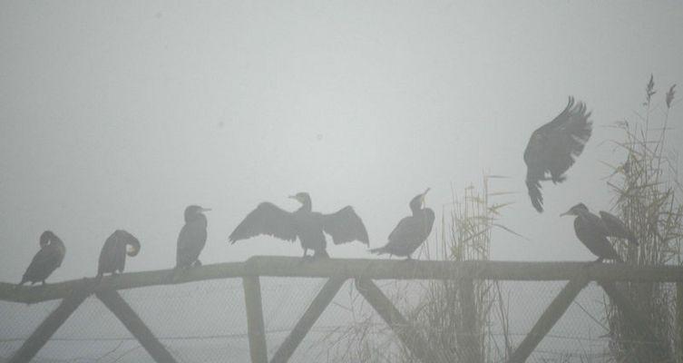 Öjendorfer See im Nebel...