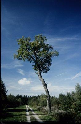 Öko Baum