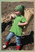 Ökologische Kartoffelarbeit