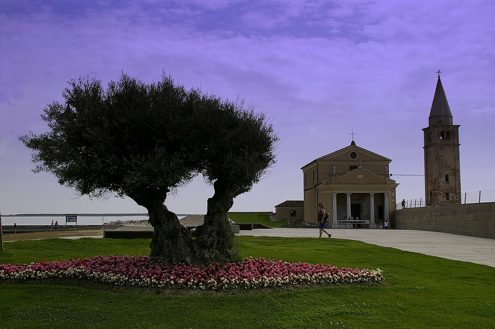 Ölbaum und Kirche