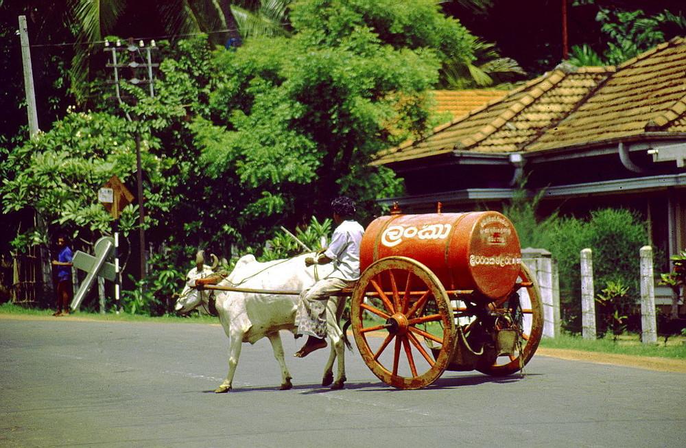 """ Ölverkäufer "" , für die Öllampen , Sri Lanka"