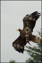 Oernens Verden Adlerwelt in Dänemark