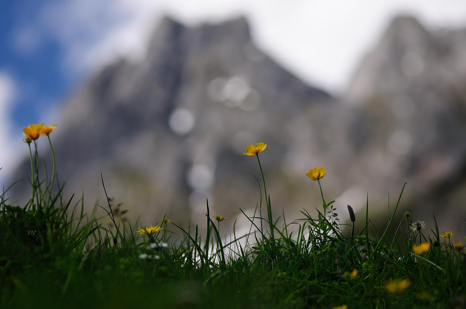 Österreich - Alpen - MariaAlm