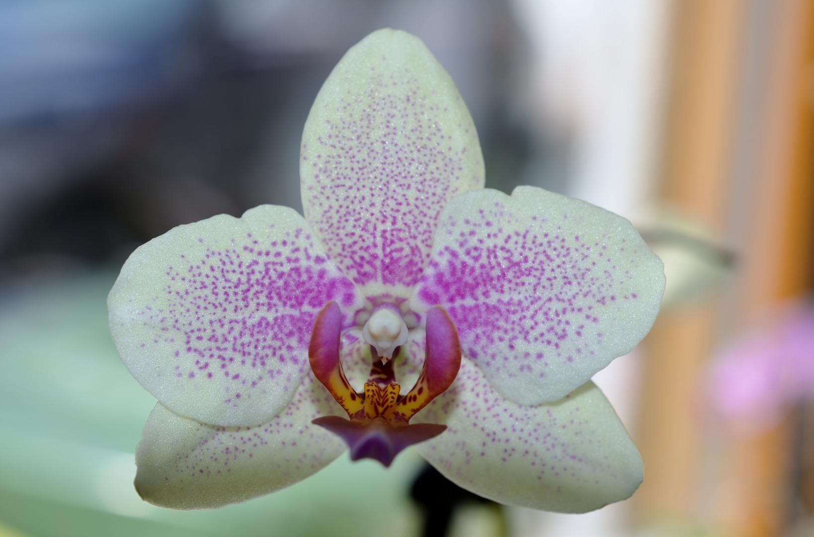 offene Blüte