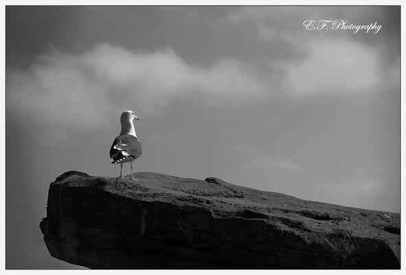 Offizier der Küstenwache - Bird on Watch
