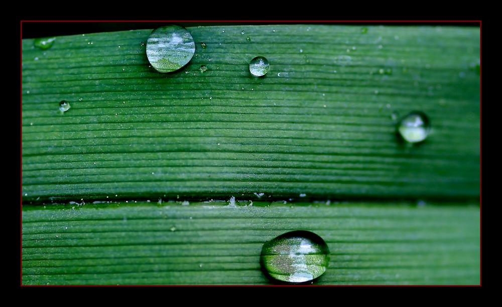 Oggi ha piovuto...domani sole !