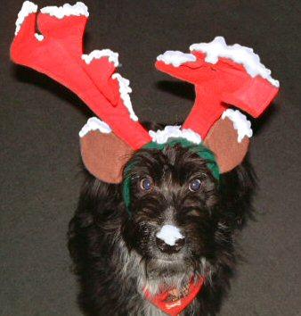 Oh ich glaube da hat der Nikolaus was vergessen...
