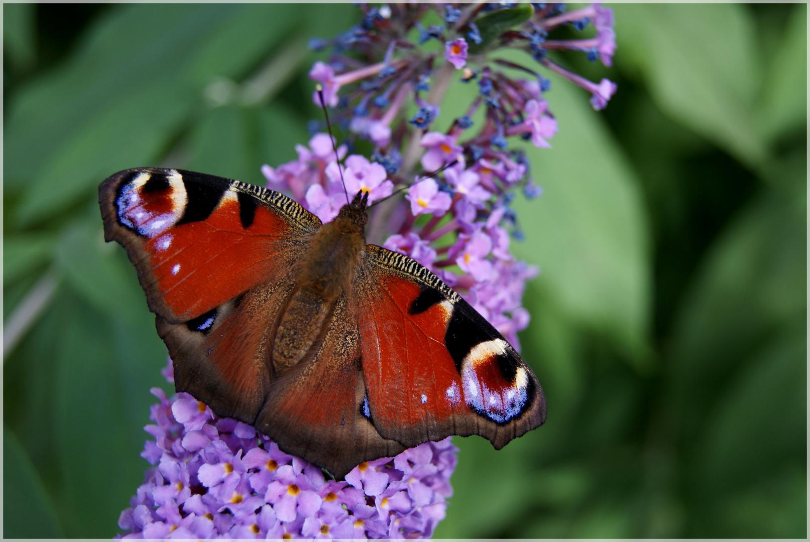 Oh le beau papillon!!