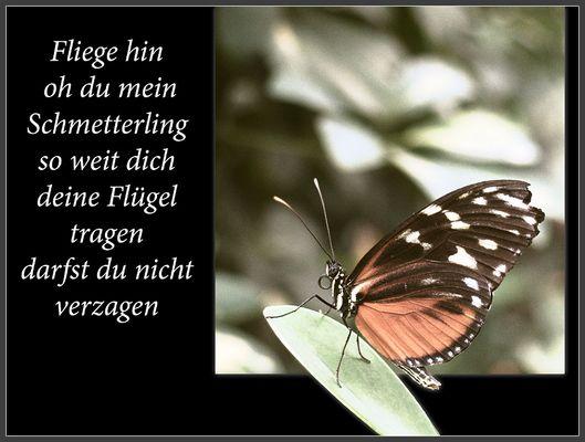 Oh mein Schmetterling
