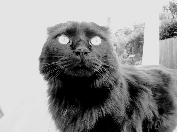 Oh my black cat!