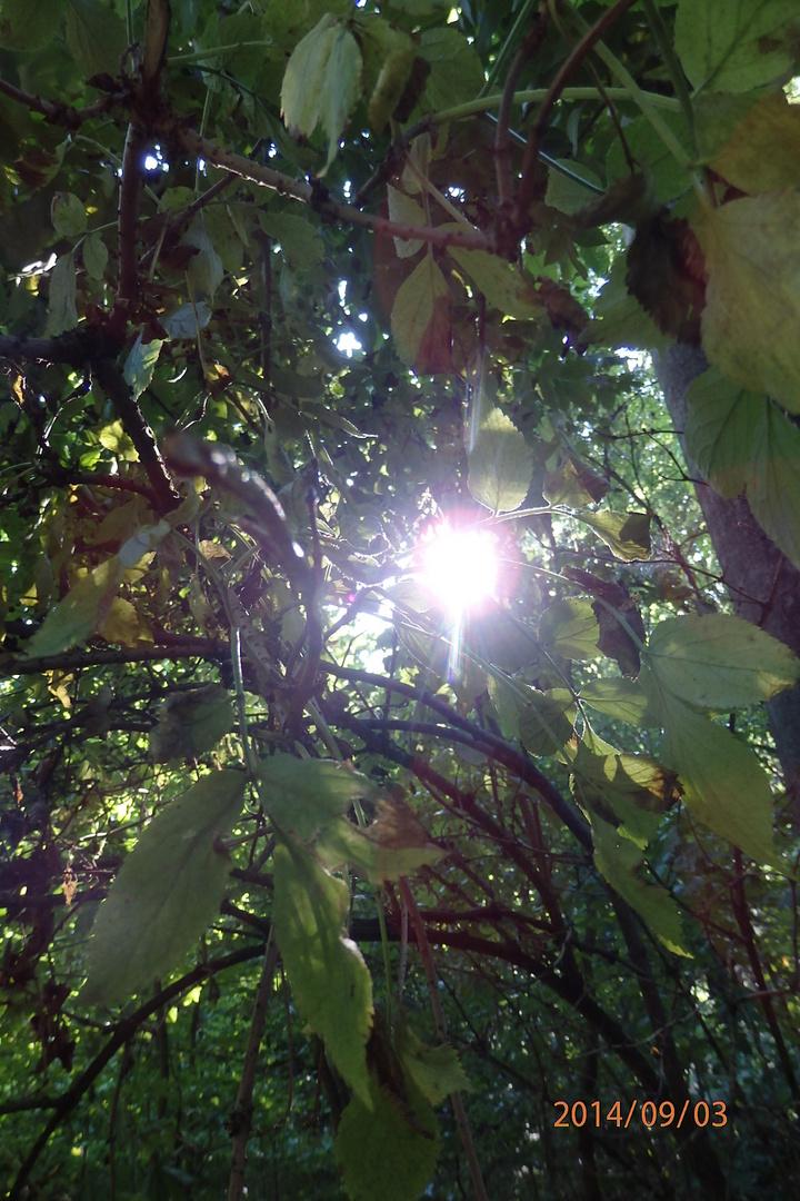 Oh Sonnenlicht