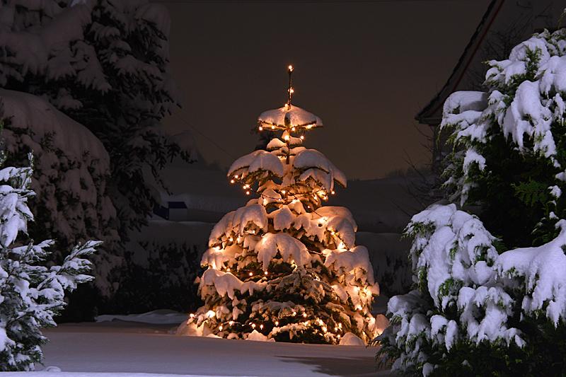 oh tannenbaum oh tannenbaum foto bild jahreszeiten winter natur bilder auf fotocommunity. Black Bedroom Furniture Sets. Home Design Ideas