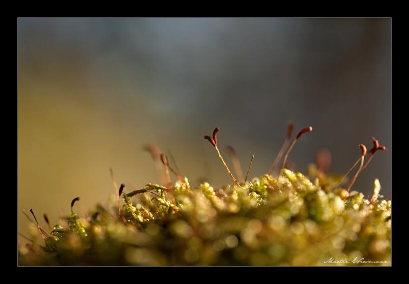 ohne Moss nix los