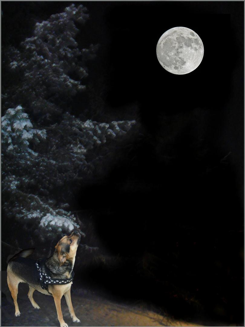 Oho, Mineli ist Mondsüchtig