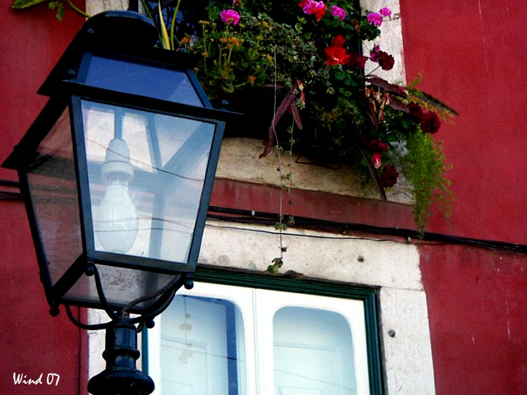 Oil lamp and flowers