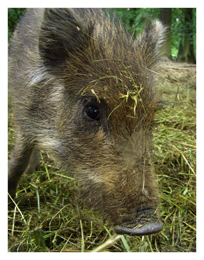 Oink - Oink