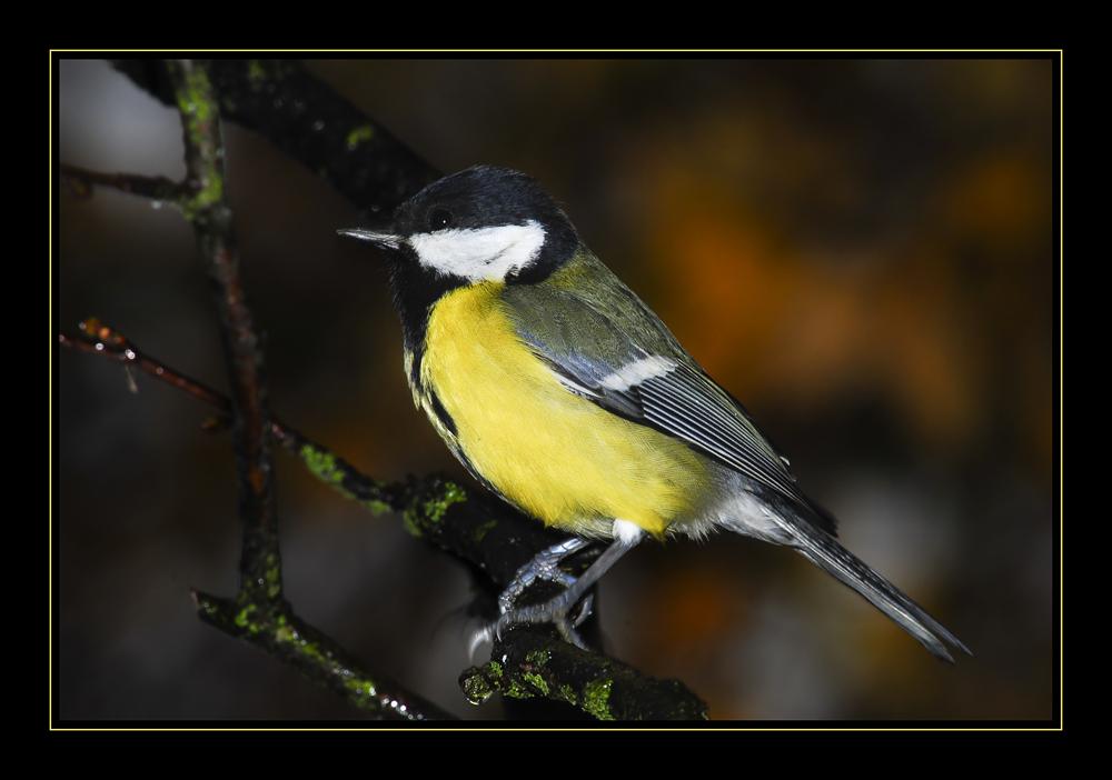 Oiseau dans la pluie