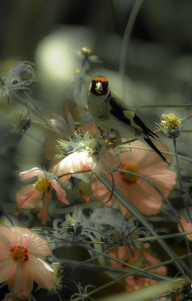 oiseau dans le cosmos