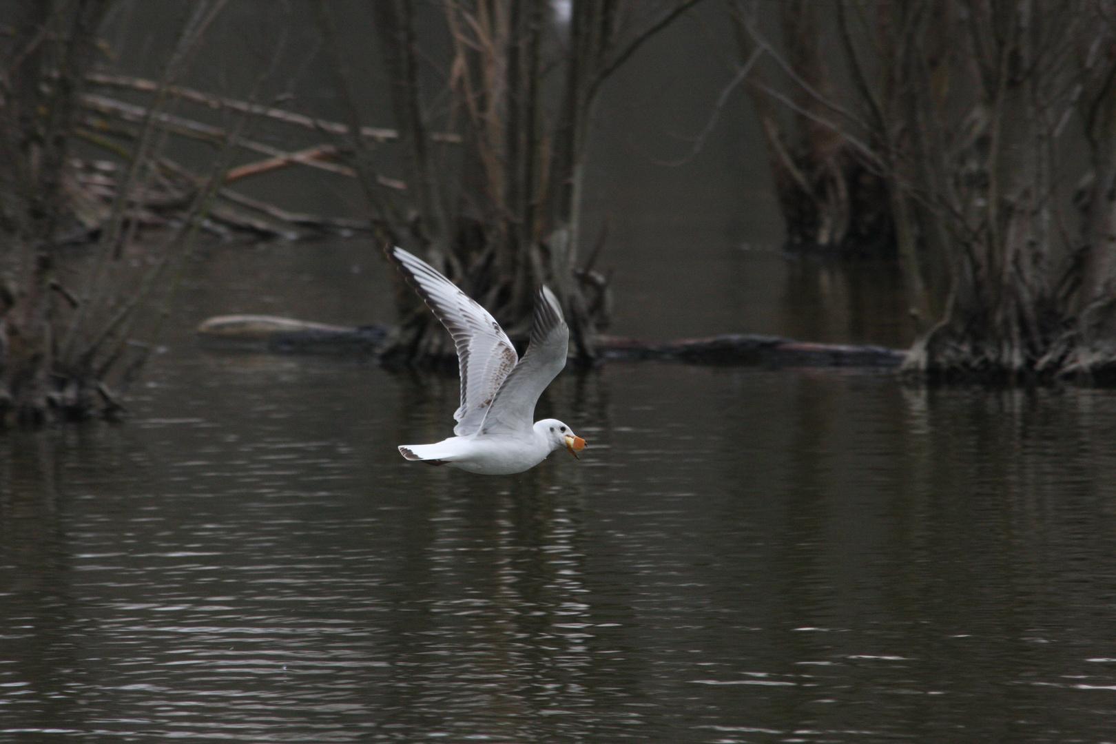 oiseau d'eau