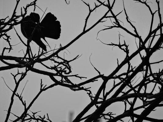 Oiseau entre branches