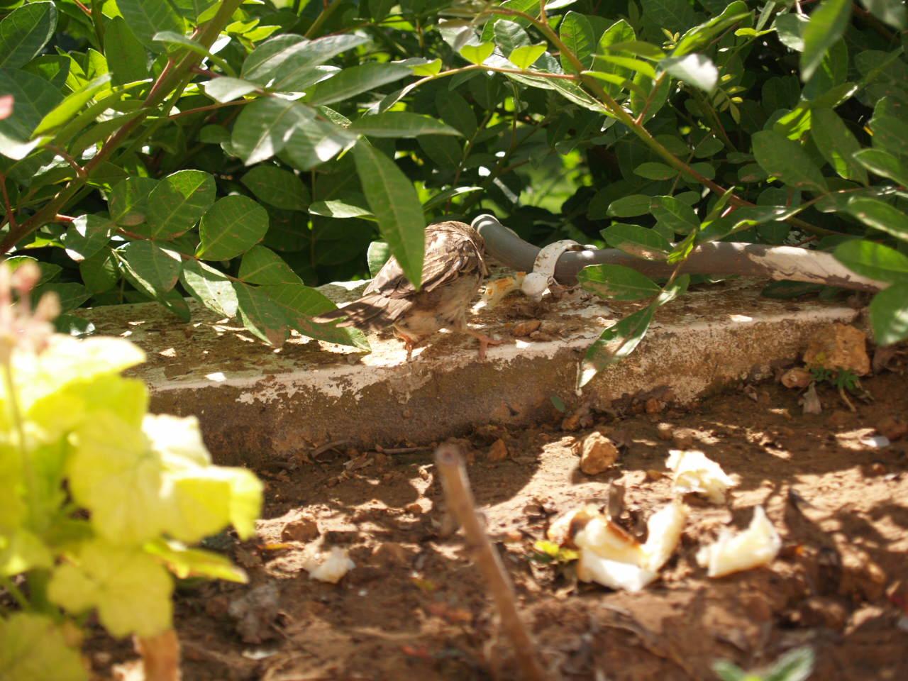 Oiseau Hammamet