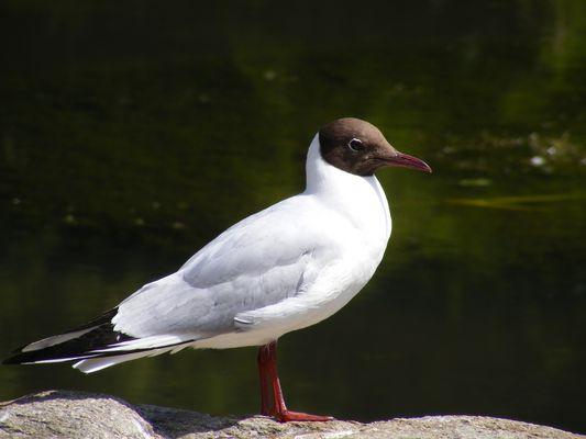 Oiseau marin (1)