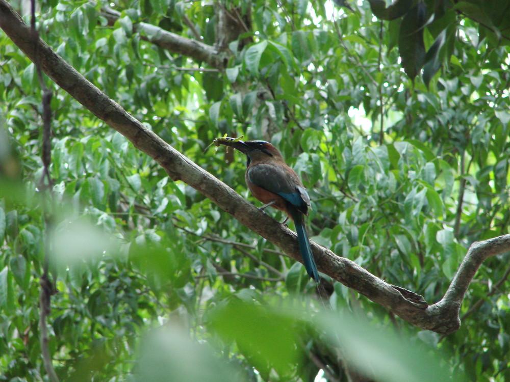 Oiseau Pendule de la Cénote de Kin Ja