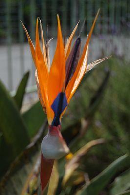 oiseaux du paradi