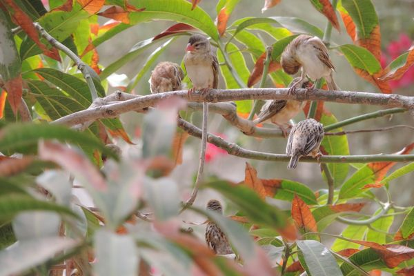 oiseaux somone sénegal