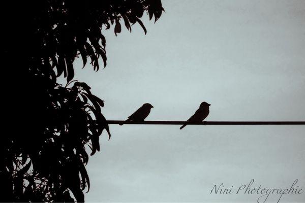 Oiseux sur le fil