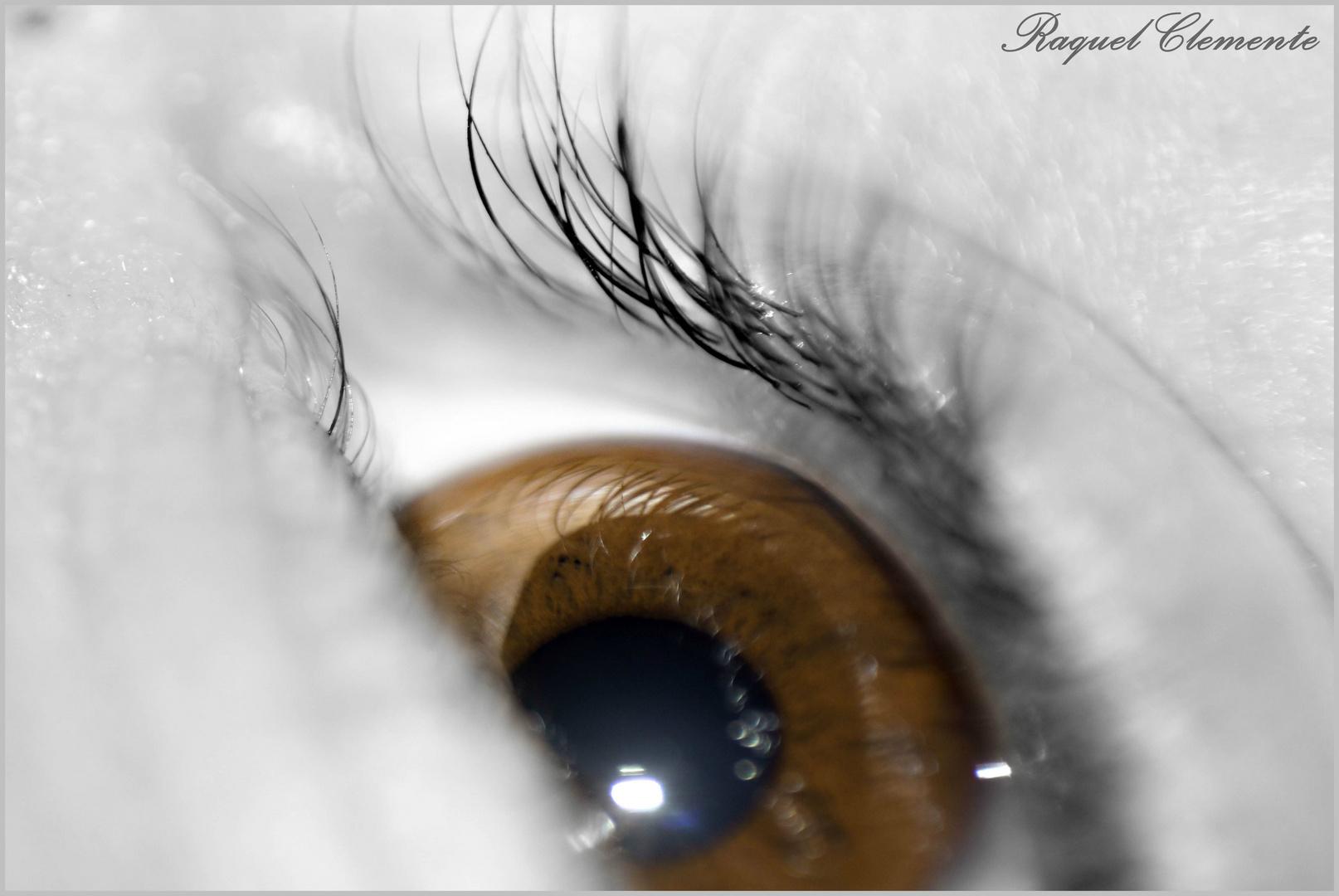 Ojos que sienten