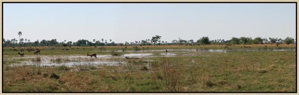 OkavangoDelta-Moremi Landzunge - Xini Lagoon