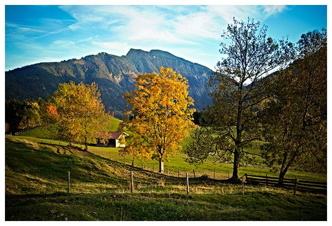 oktober-alpen-wald2