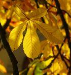 Oktober-Gold