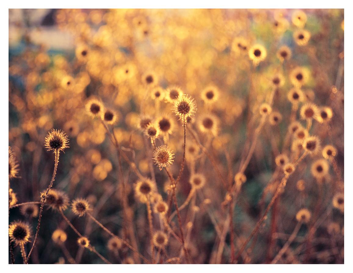 Oktober (golden)