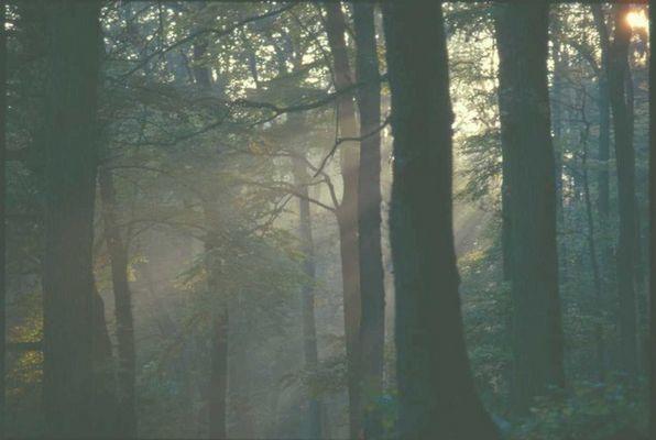 Oktober im Aachener Wald
