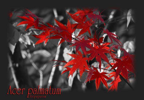 Oktober-Rot ...