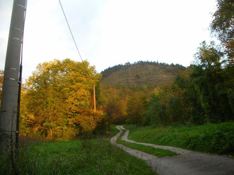 Oktoberbäume