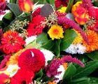 Oktoberblümchen vom Wochenmarkt