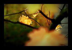 Oktoberblues