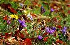 Oktoberflora
