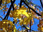 Oktobergold I