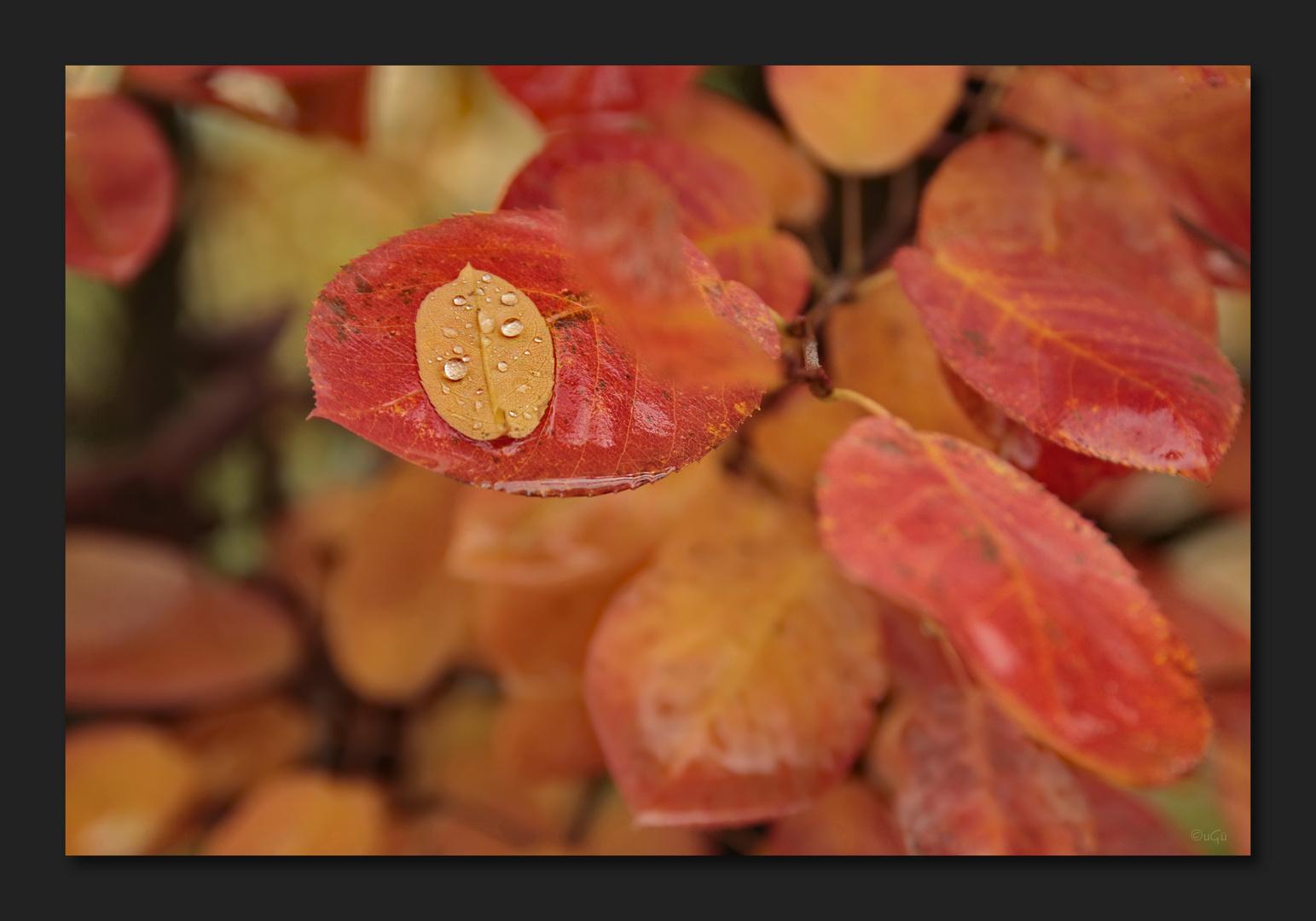 Oktoberregen