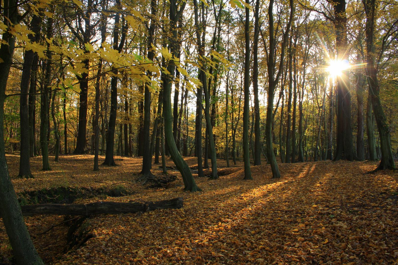 Oktobersonne