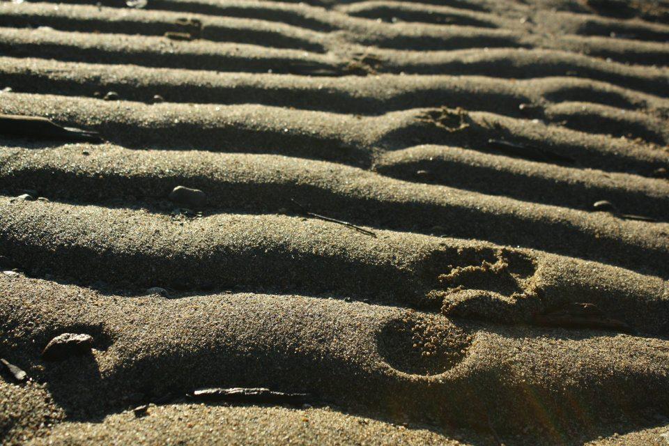 olas de la arena